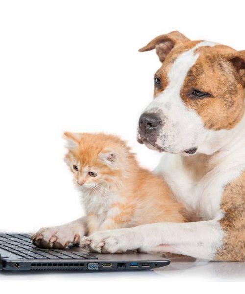 Online veterinery Doctor